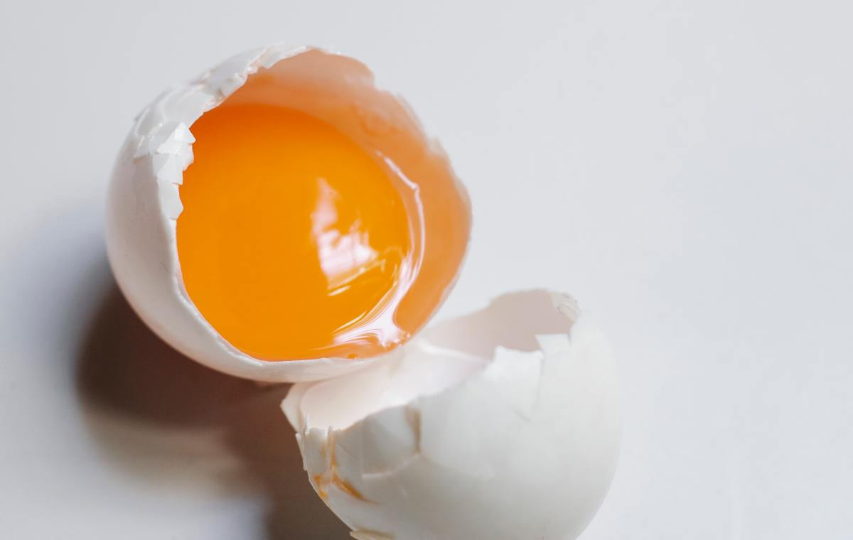 Egg - Rich Source Protein