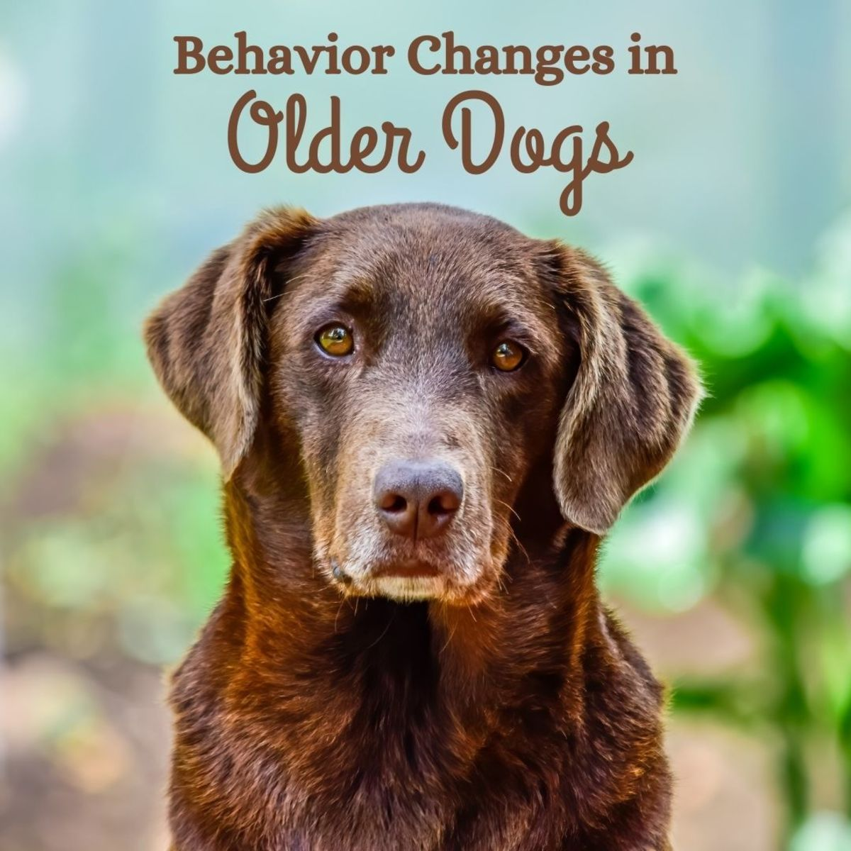 Older dogs often exhibit behavioral changes—here's what you can expect.