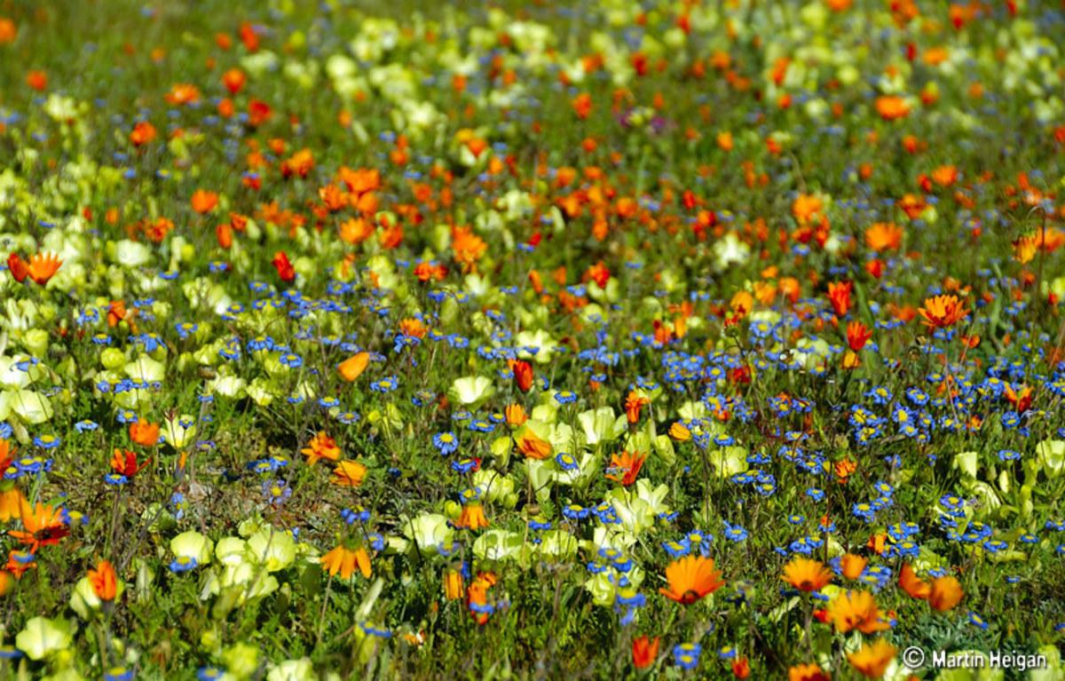 10 Beautiful Garden Flowers