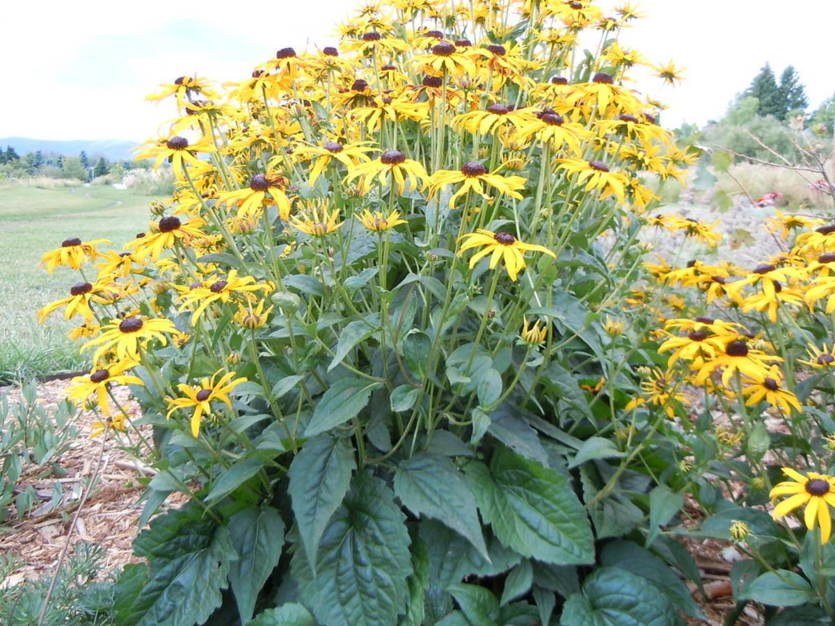 10-beautiful-garden-flowers