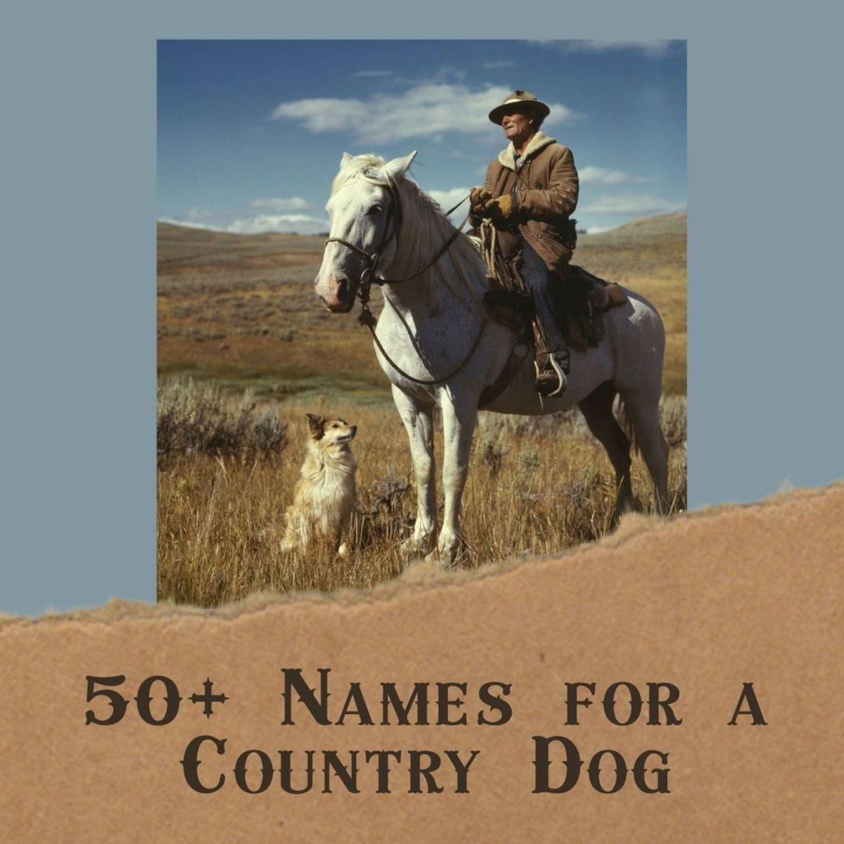 50+ Redneck and Bodacious Country Music Dog Names