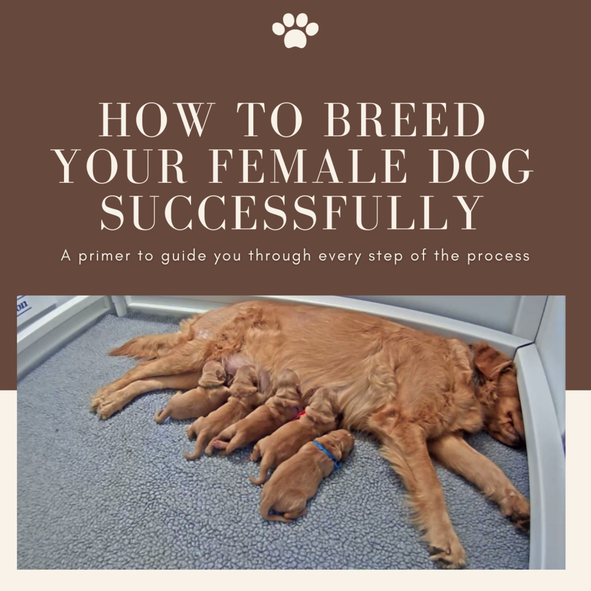 This article will help guide you through every part of the breeding process for your female dog.
