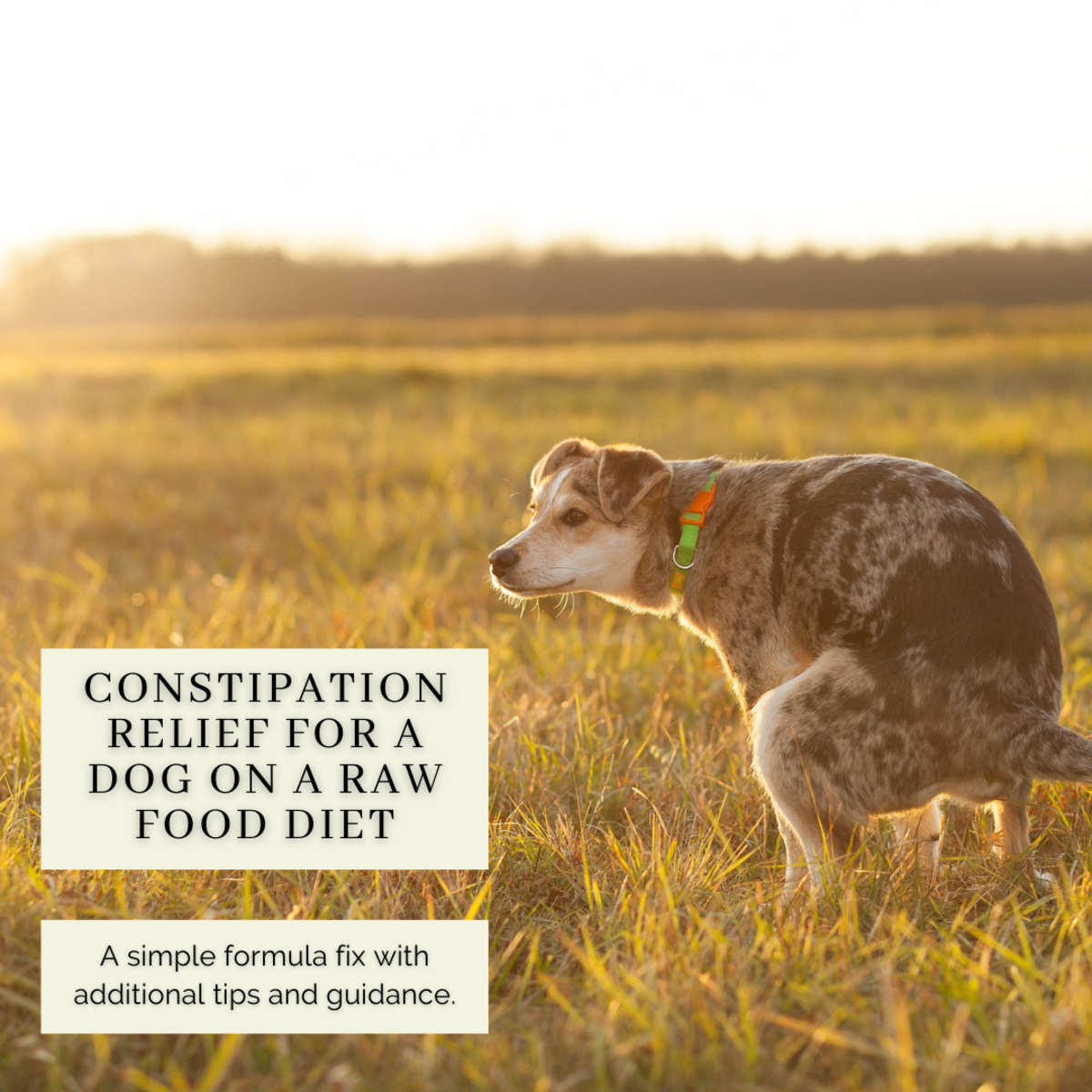 Easy Constipation Relief for a Dog Eating a Raw Dog Food Diet