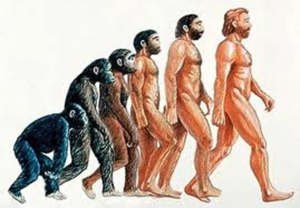 Evolving to human; There are good reasons to believe that slowly evolution has helped in making man the way we are, with the help of God of course, since God is the essence of all existing life of the universe.