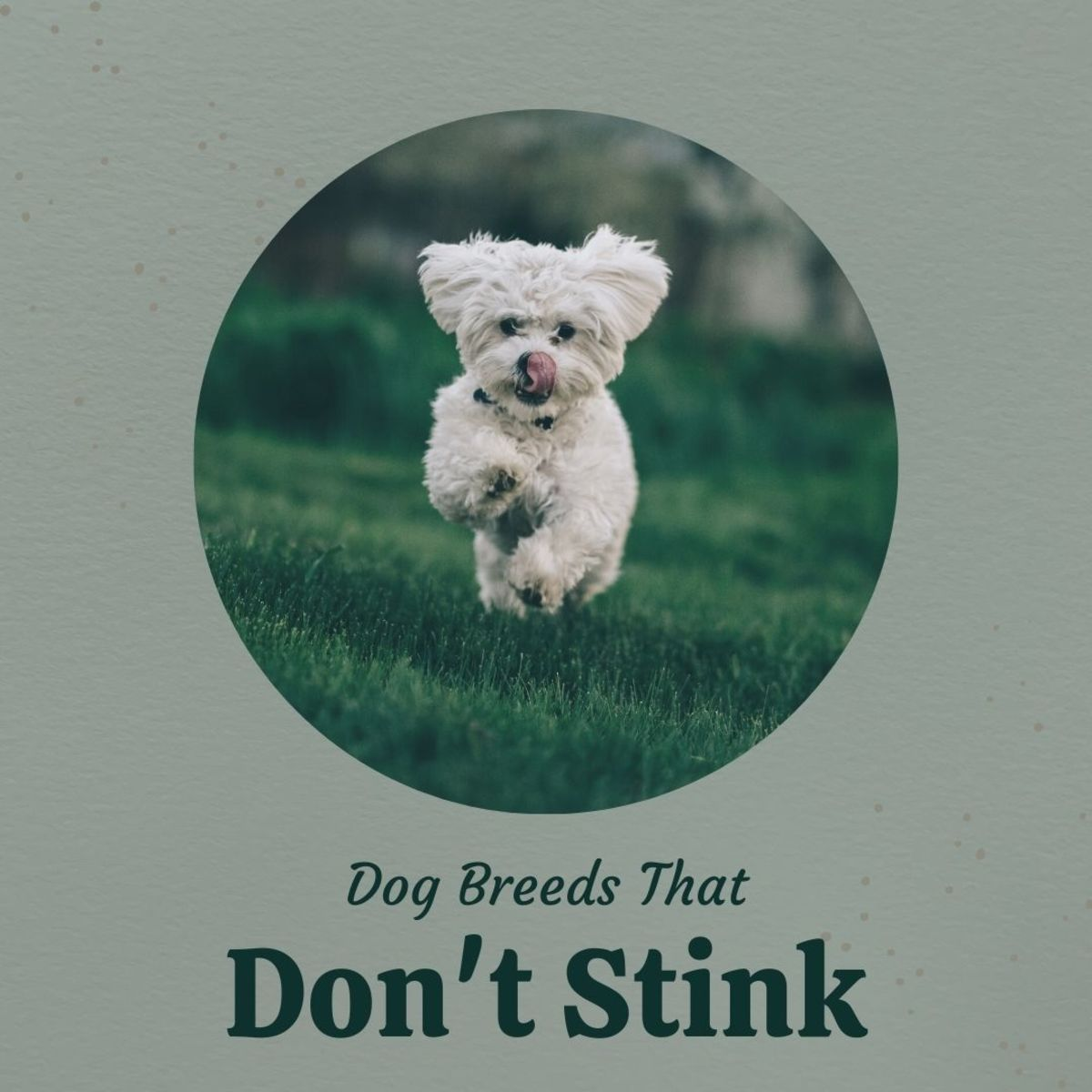 7 Dog Breeds That Won't Stink Up Your House