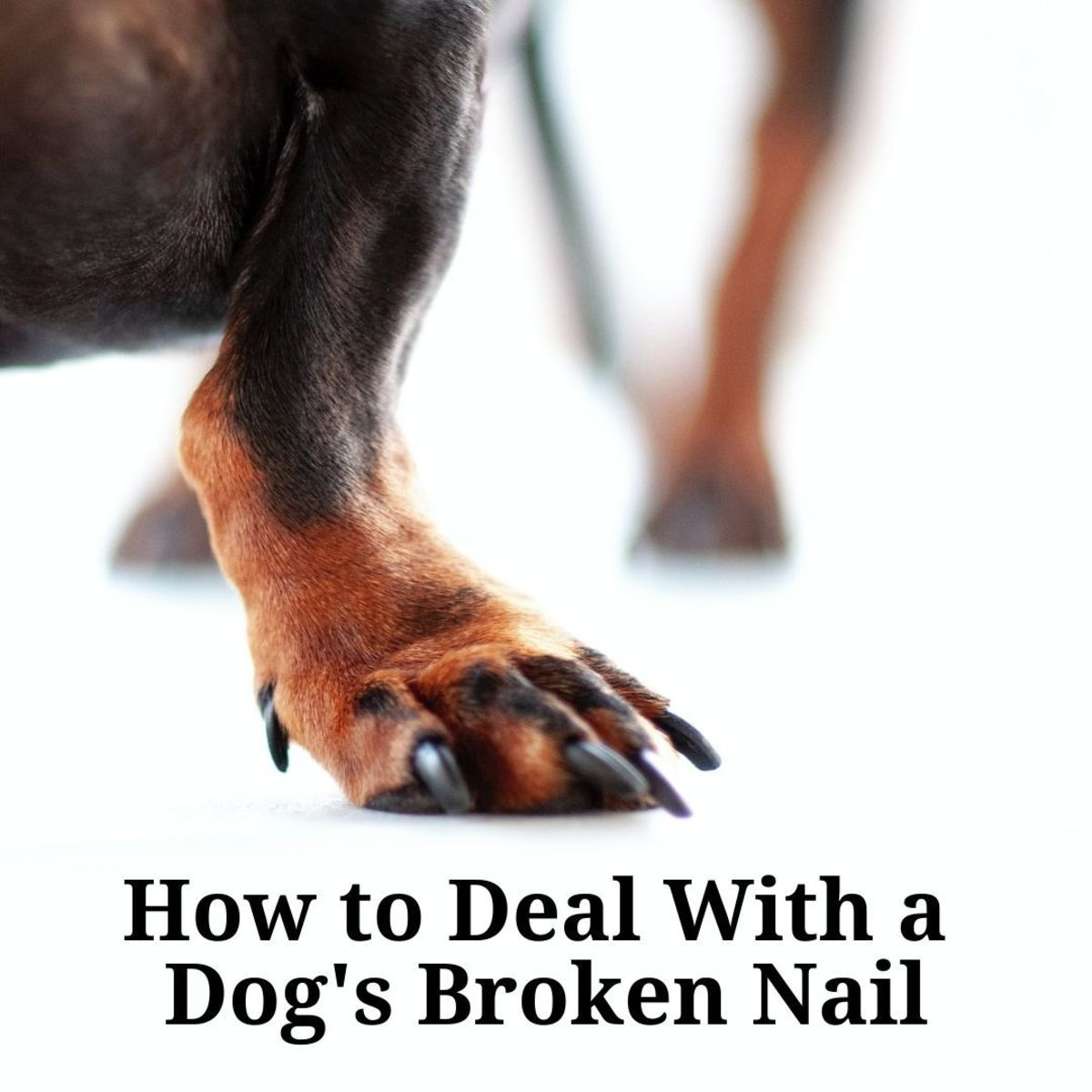 Vet Approved Tips for Dealing With a Dog's Broken Nail   PetHelpful