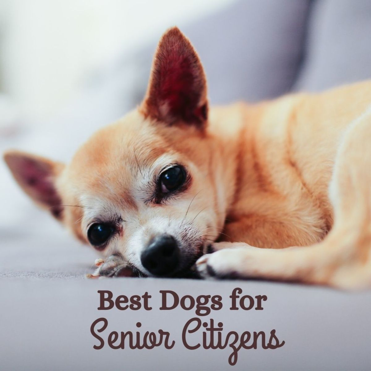 The Five Best Dog Breeds for Senior Citizens