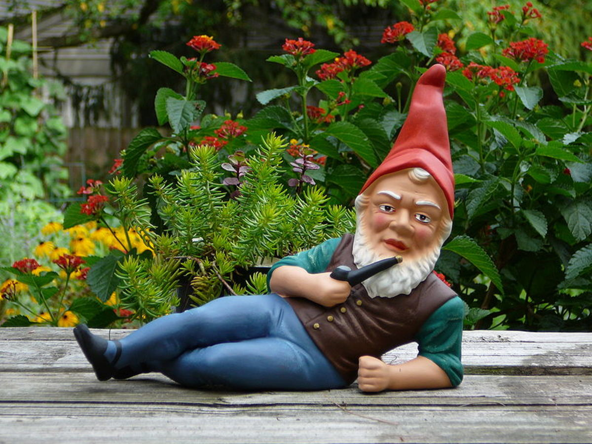 Photographing Garden Gnomes