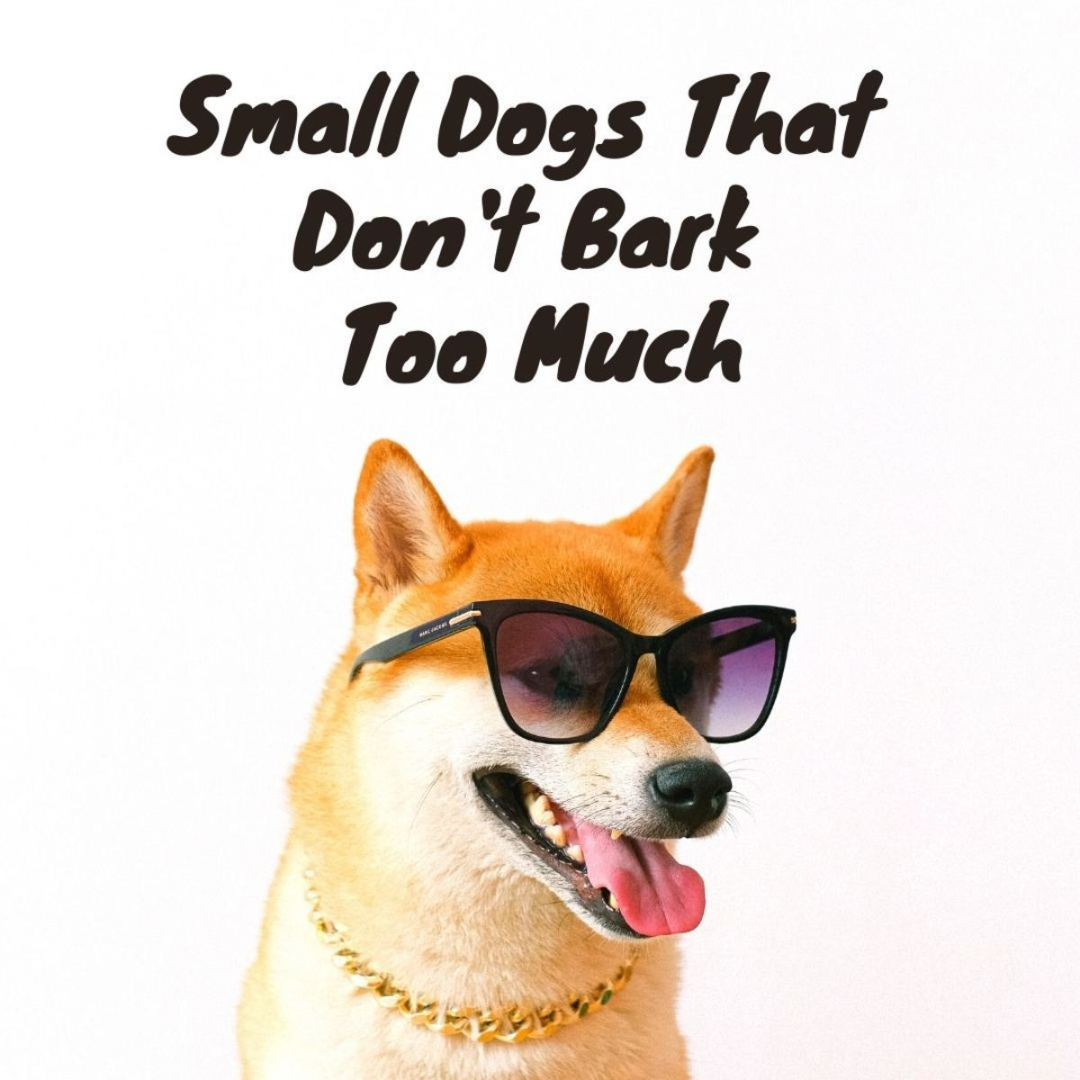 6 Small Dog Breeds That Don't Bark (A Lot!)