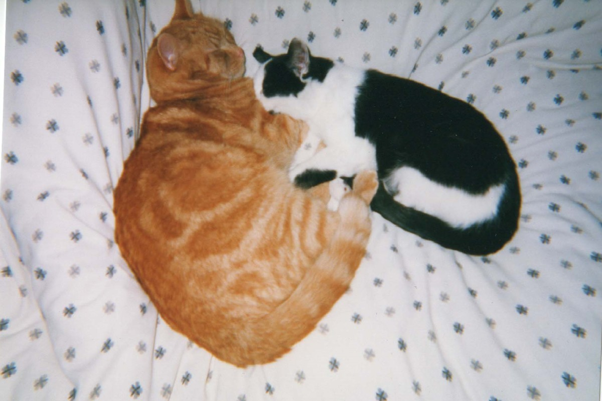 Rusty and a new cat, Poppy