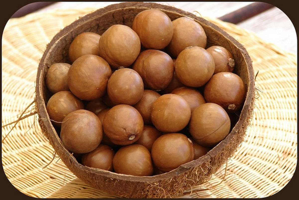 health-benefits-of-macadamia-nuts