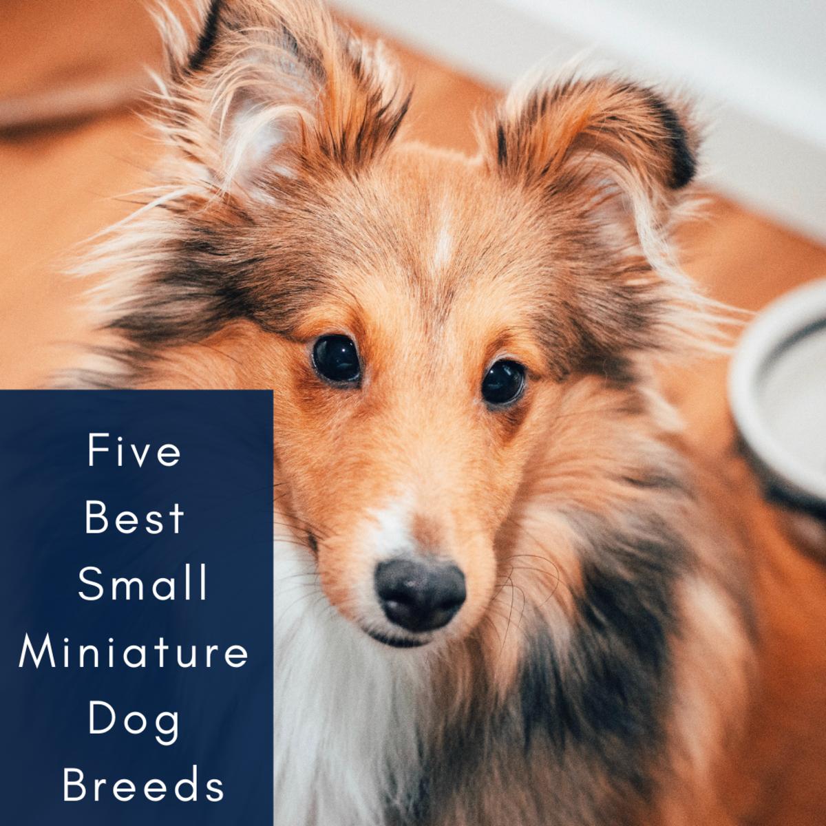 5 Best Small Miniature Dog Breeds