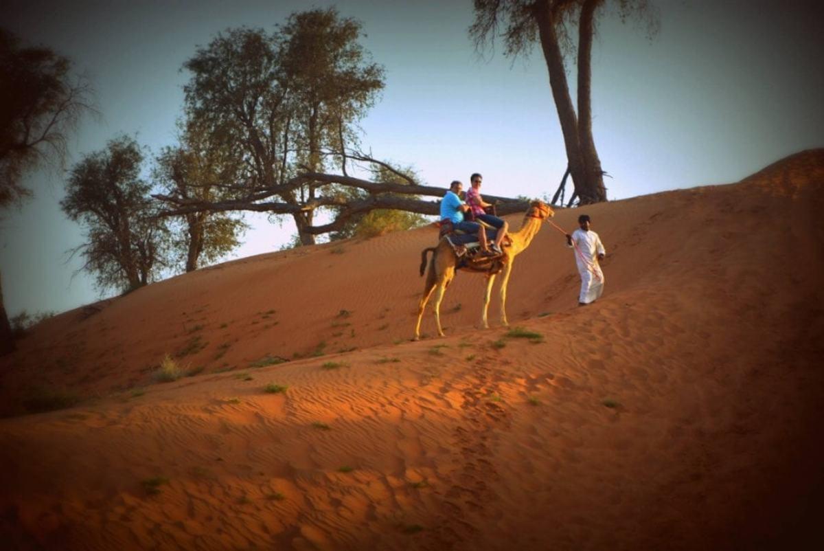 dubai-safari-entertainment-for-the-day