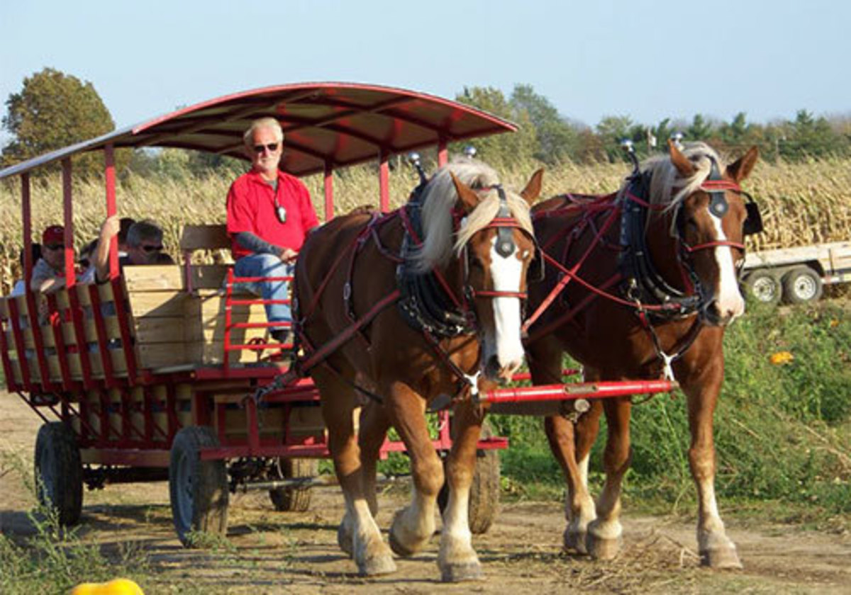This is how hayrides went i the old days--by mule or horse power, but what fun.