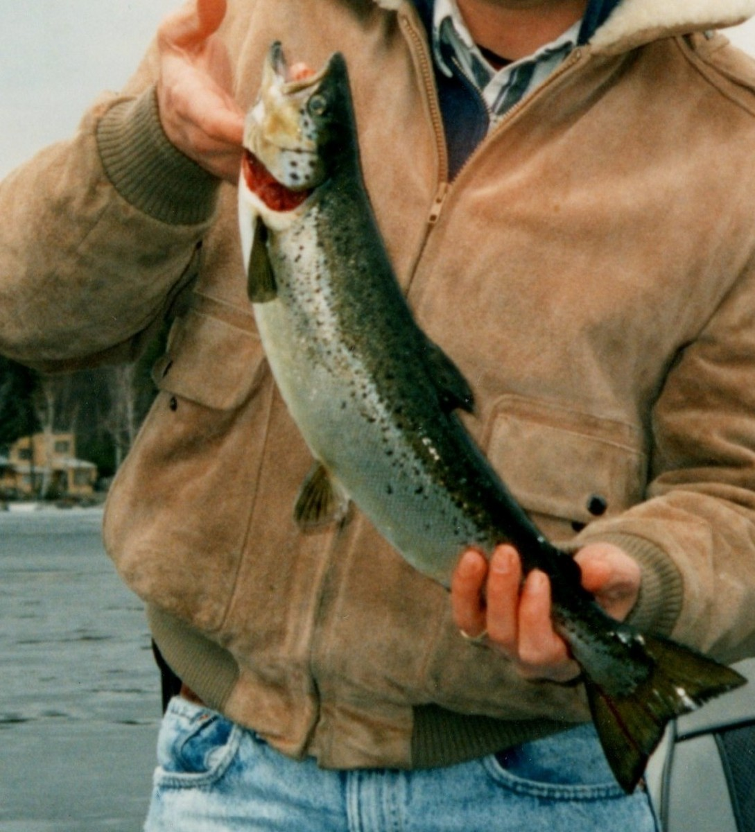 A nice landlocked salmon from East Grand Lake, ME.