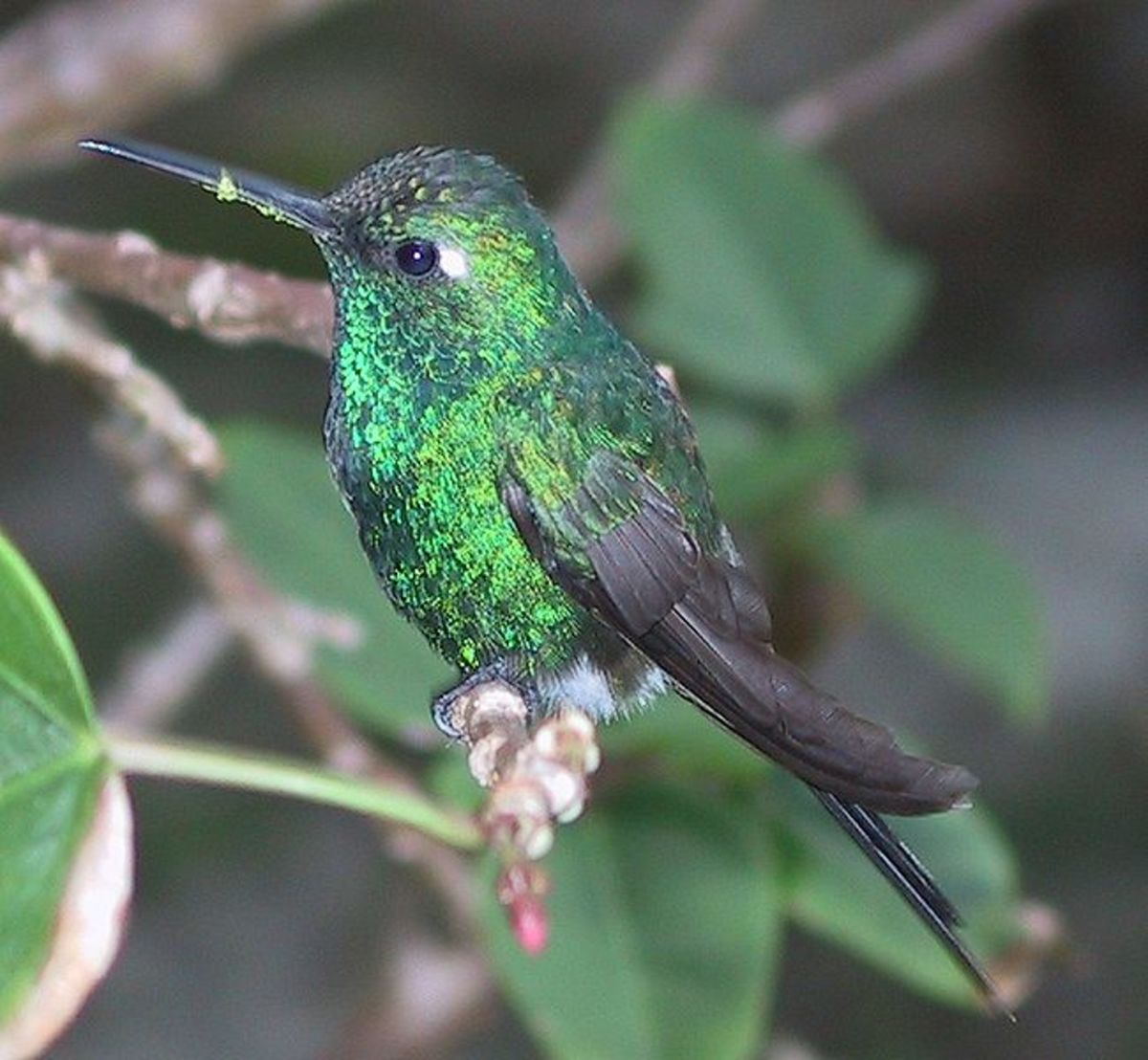55-facts-about-hummingbirds