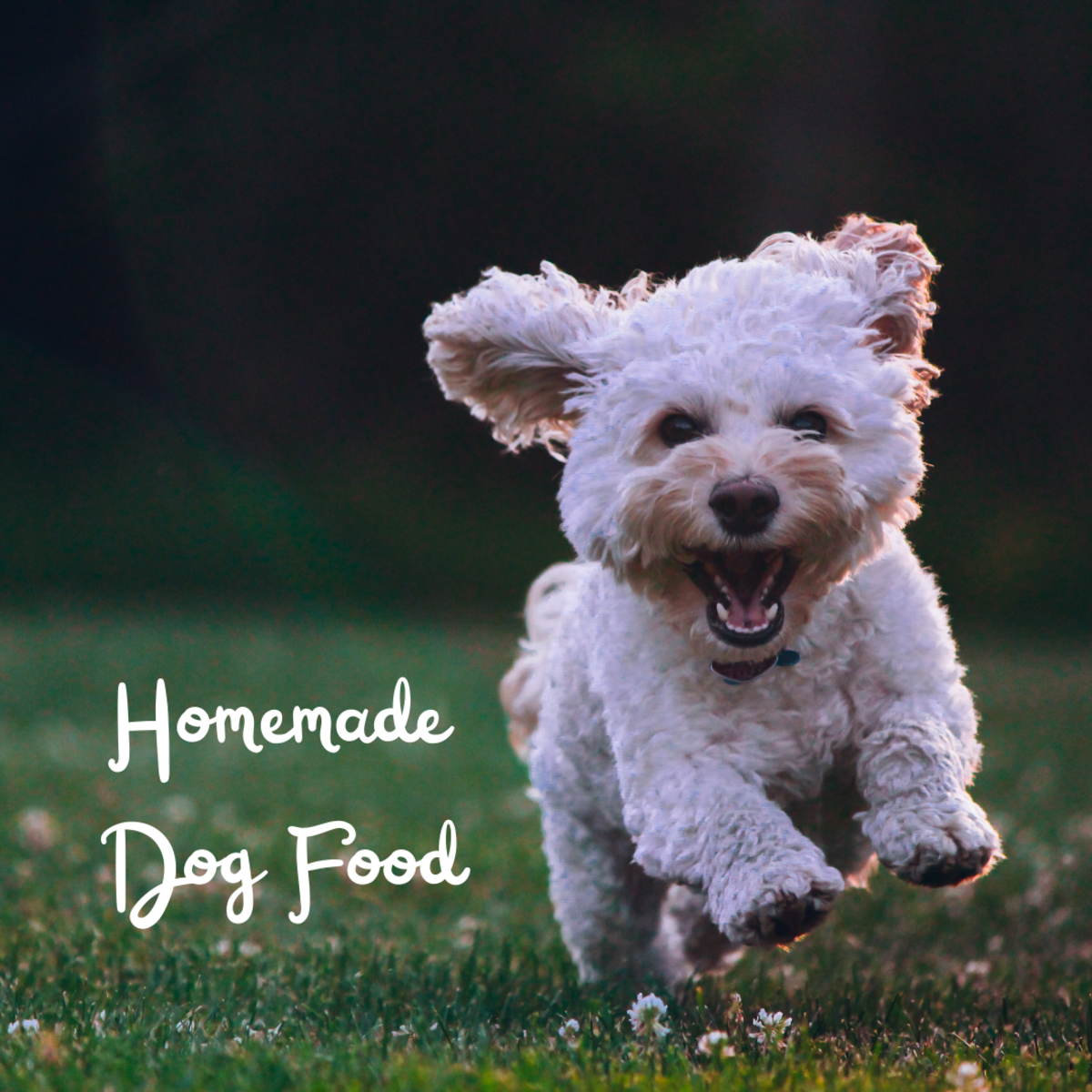 Two Delicious Dog Food Recipes for Small Dogs