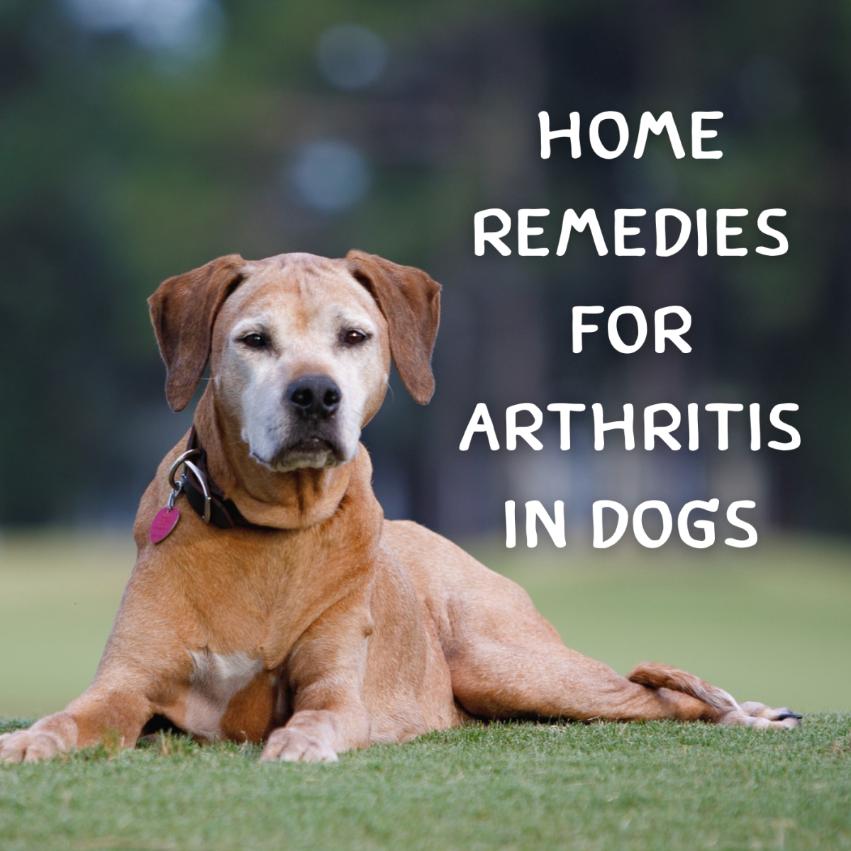 Arthritis in Dogs: Natural Home Remedies for Joint Pain