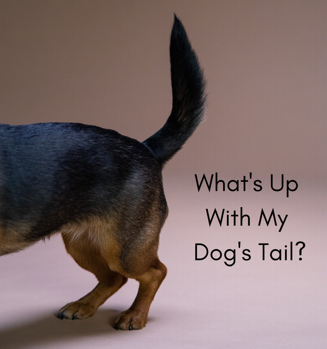 Tips on how to find out what's wrong with your dog's tail