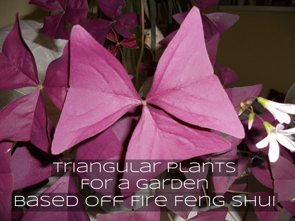 Add plants with triangular leaves to fit in with yang principles or to work with fire feng shui in your garden.