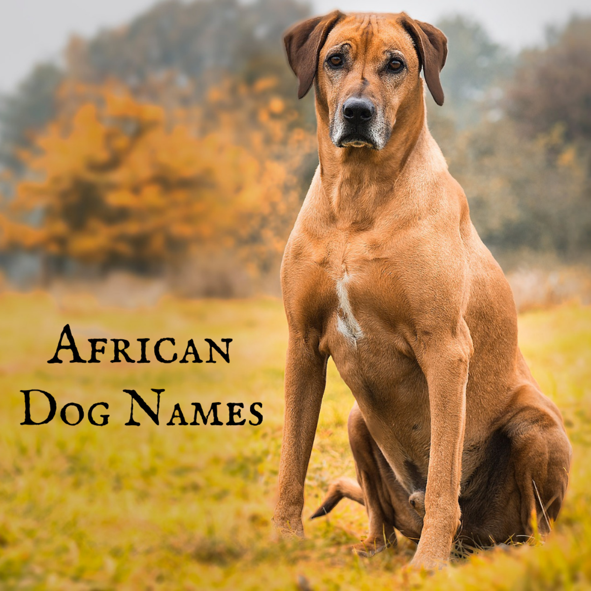 A Rhodesian Ridgeback deserves a name with African roots