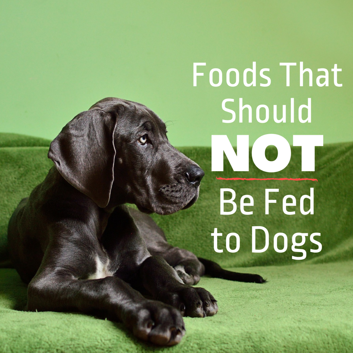 Based on a veterinarian's advice, do not feed your dog these foods.