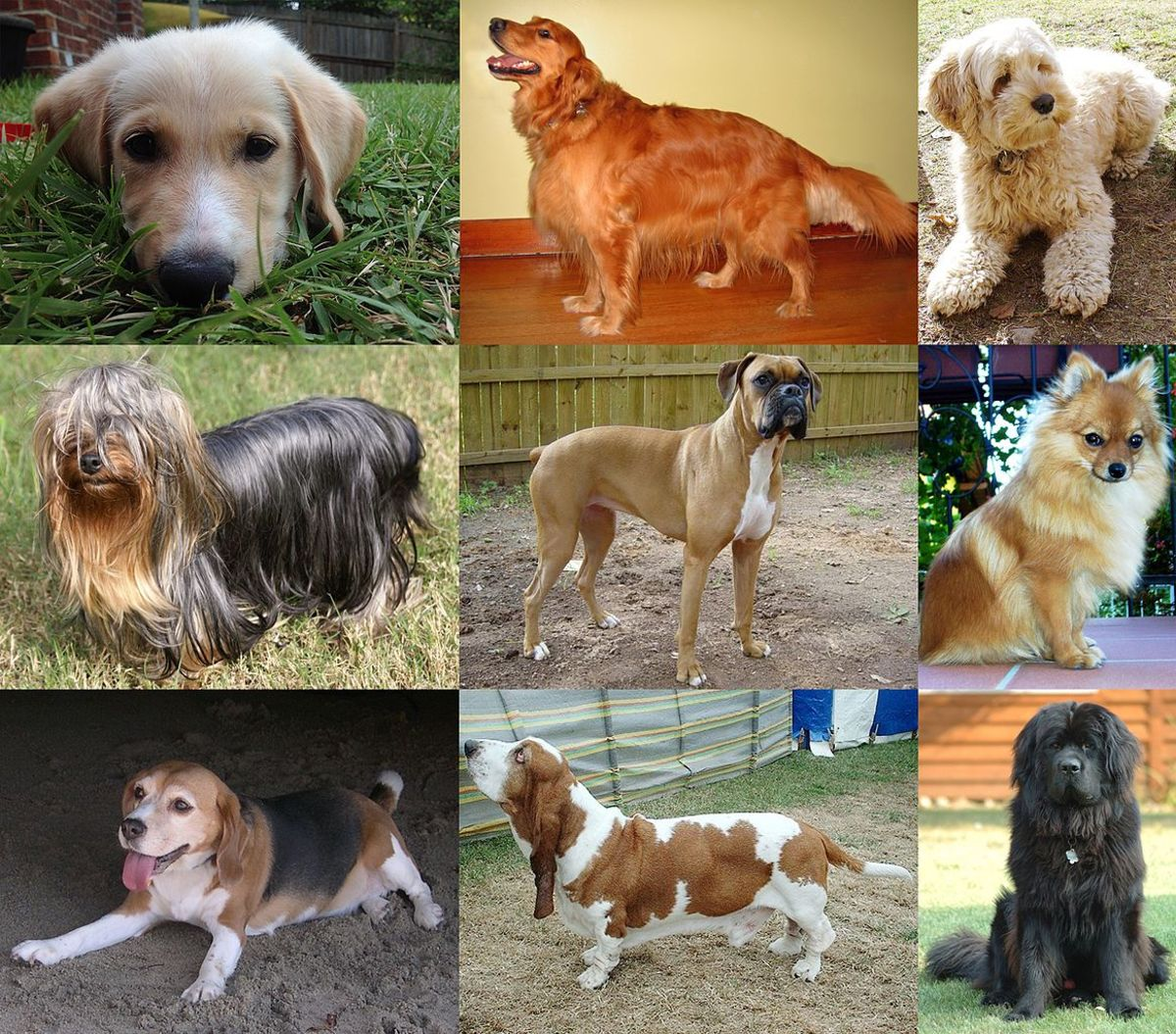 pets-of-the-united-states-presidents