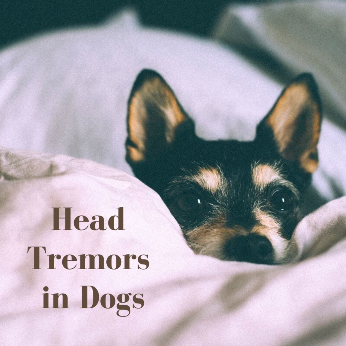 Is your dog's head moving from side to side? What causes head bobbing and tremors in dogs?