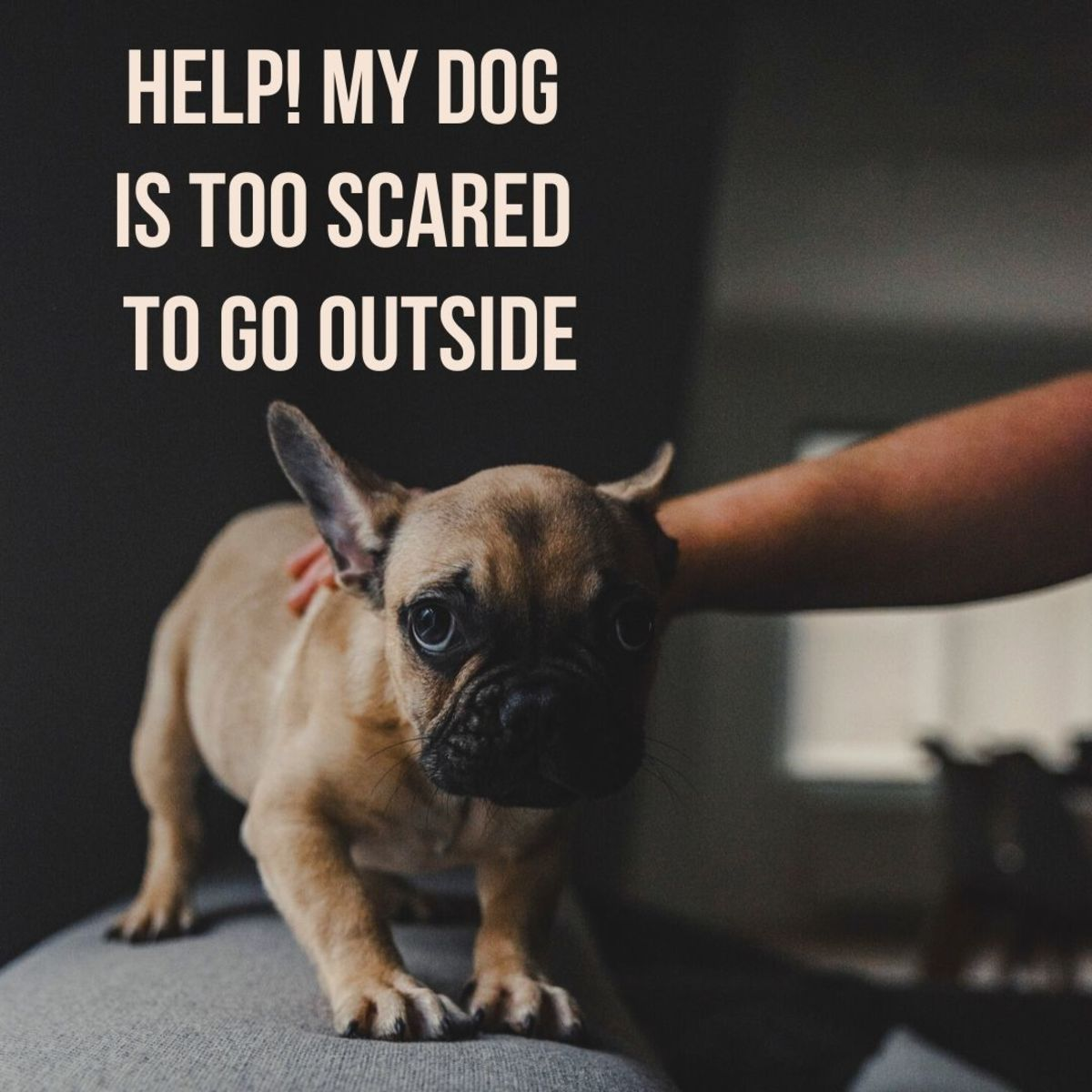 Why doesn't my dog want to go outside?