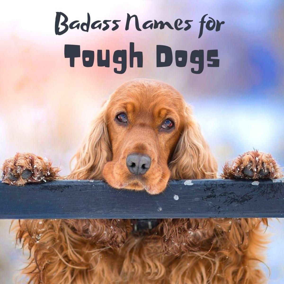 90+ Tough and Badass Dog Names: Outlaws and Gangstas