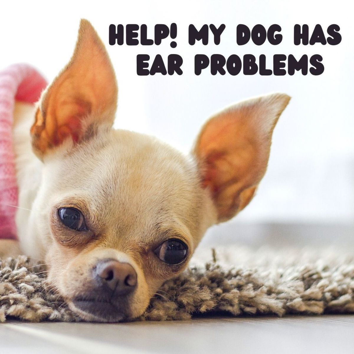 Why Does My Dog Have Ear Scabs and What Can I Do?