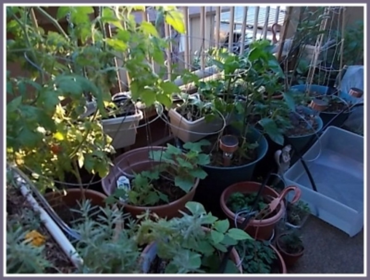 Garden Showing Drip Irrigation System Set Up