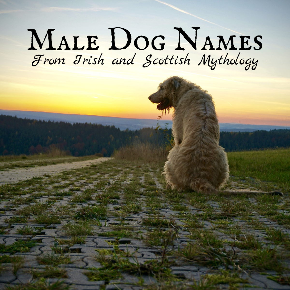 Choose from a list of meaningful dog names inspired by Celtic history and legend.