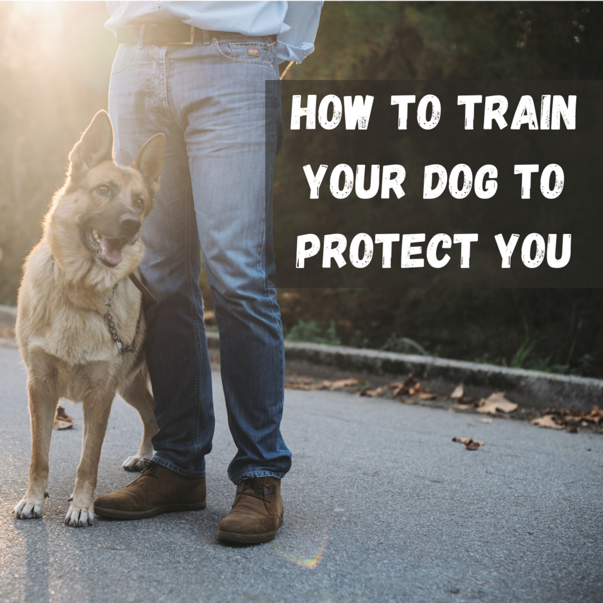 If you want a dog that's going to protect you rather than simply be your pal, here are five critical training tips.