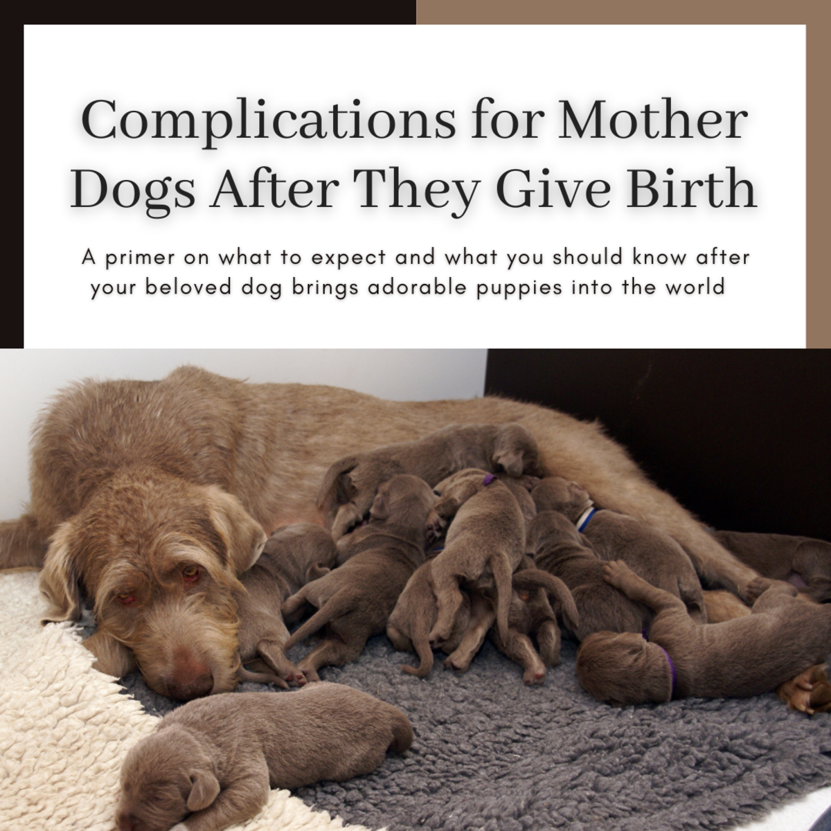 This guide will help you understand what common behaviors are normal after your dog gives birth and what conditions require immediate veterinary attention.