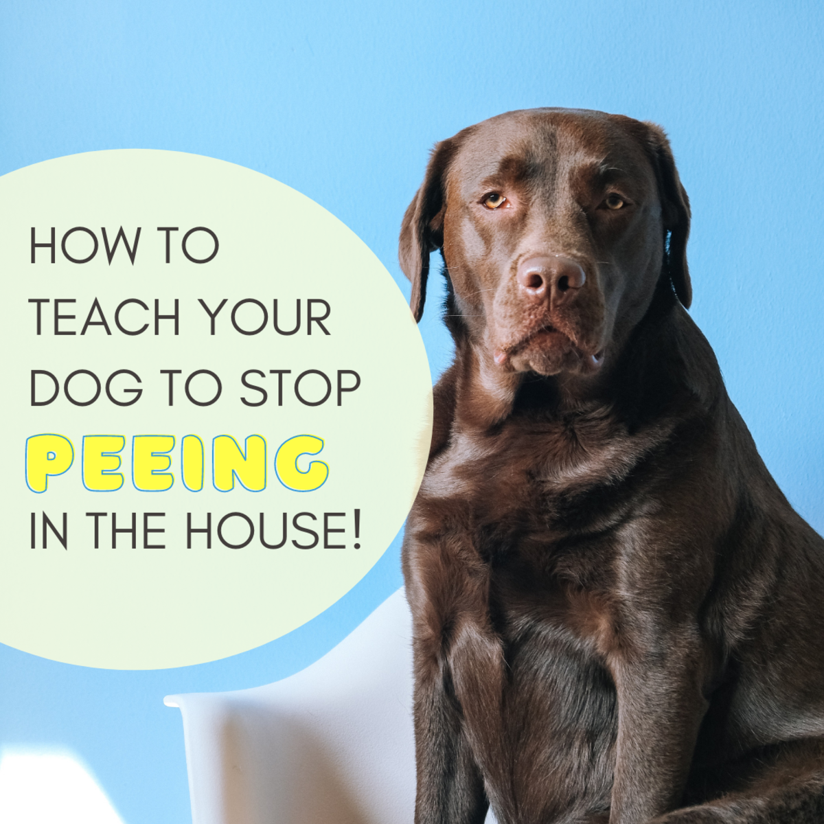 If your dog is no longer a puppy but continues to piddle in the house like one, here are some tips to help you.