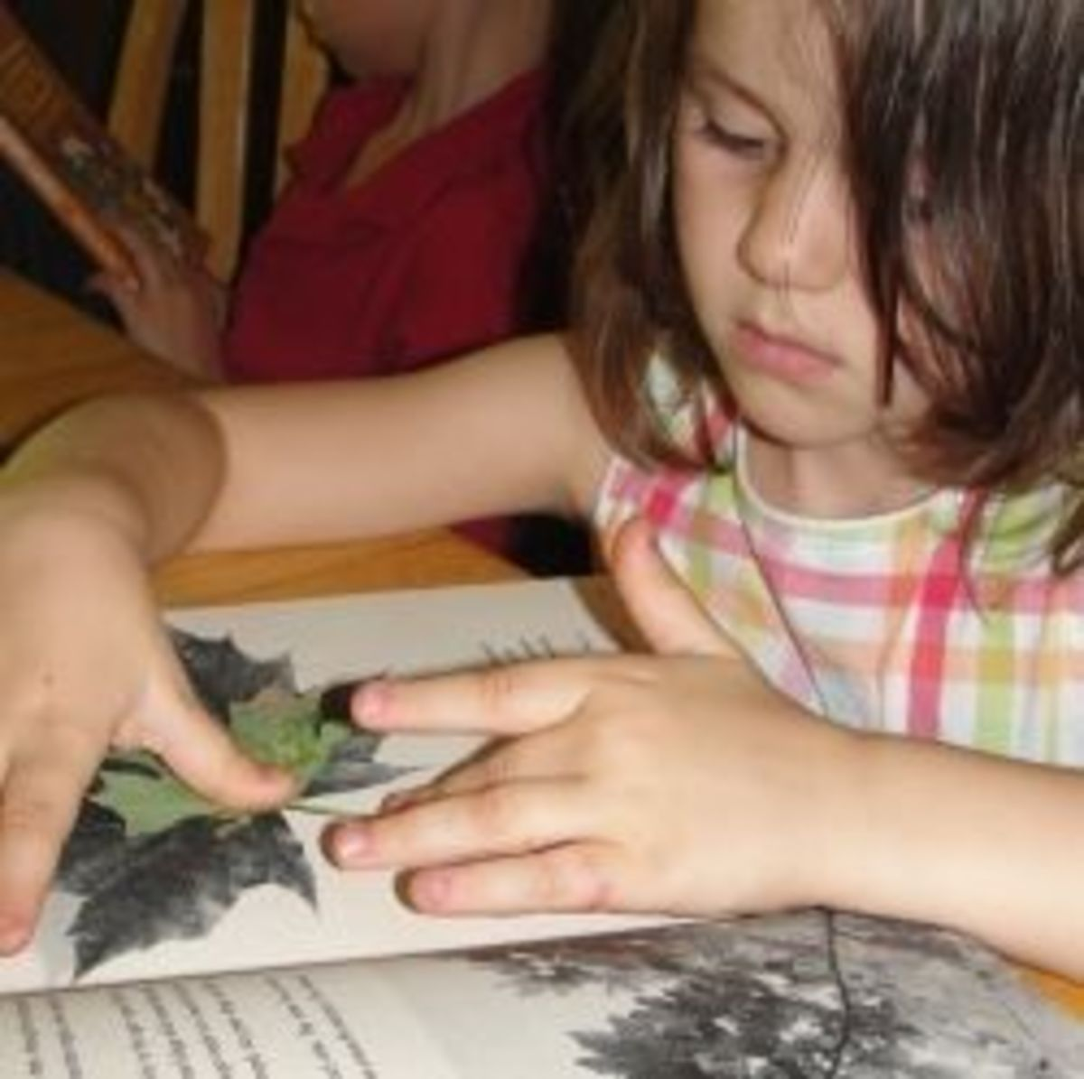 Using a field guide and leaf to identify a tree