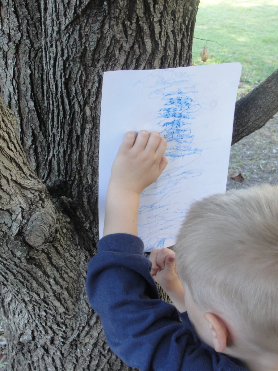 Bark rubbing to help identify the tree