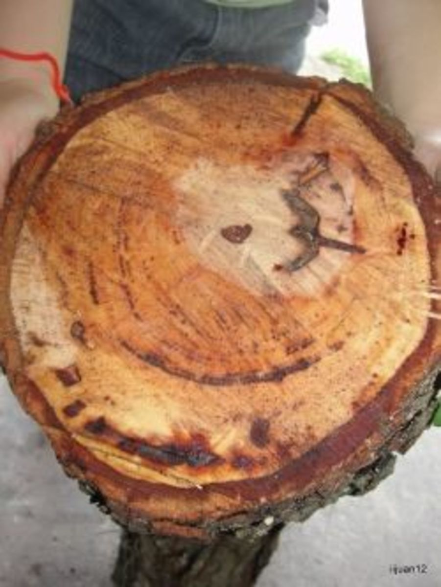 Tree cookie for counting rings