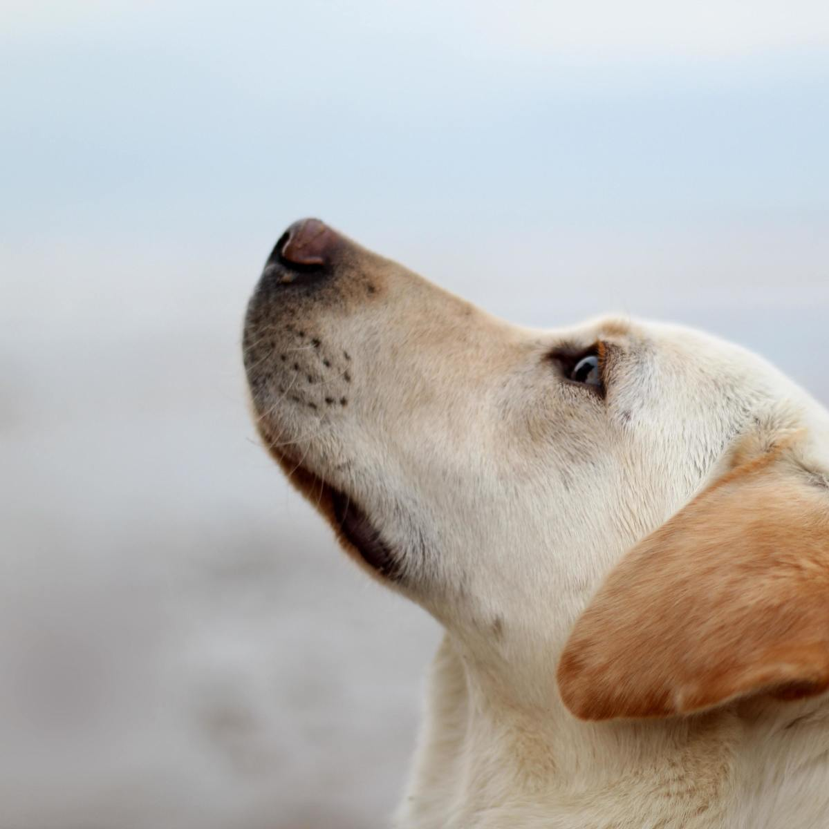 What might be causing your dog's skin tags?