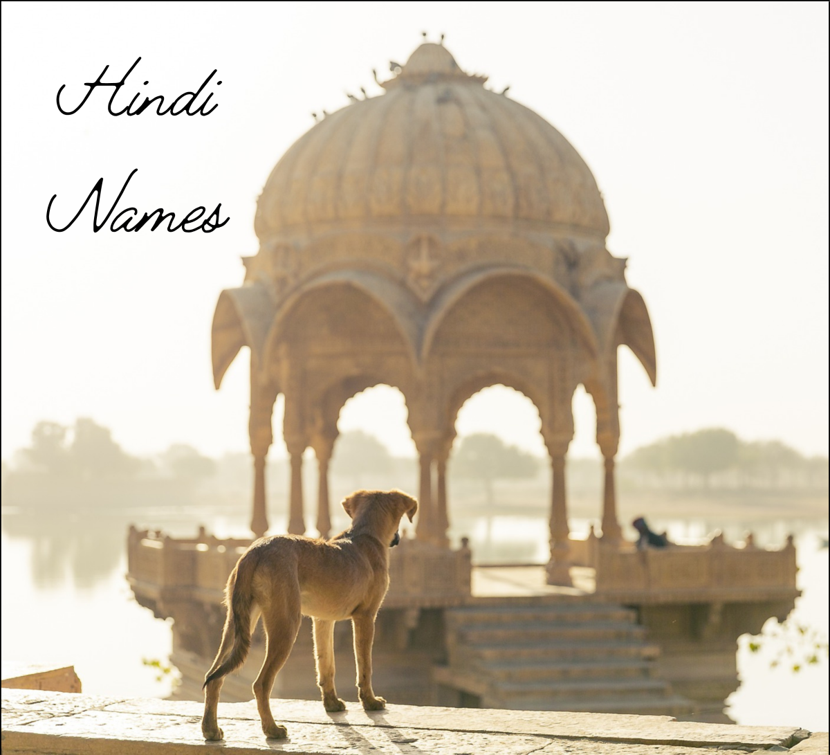 35+ Best Hindi Dog Names From India