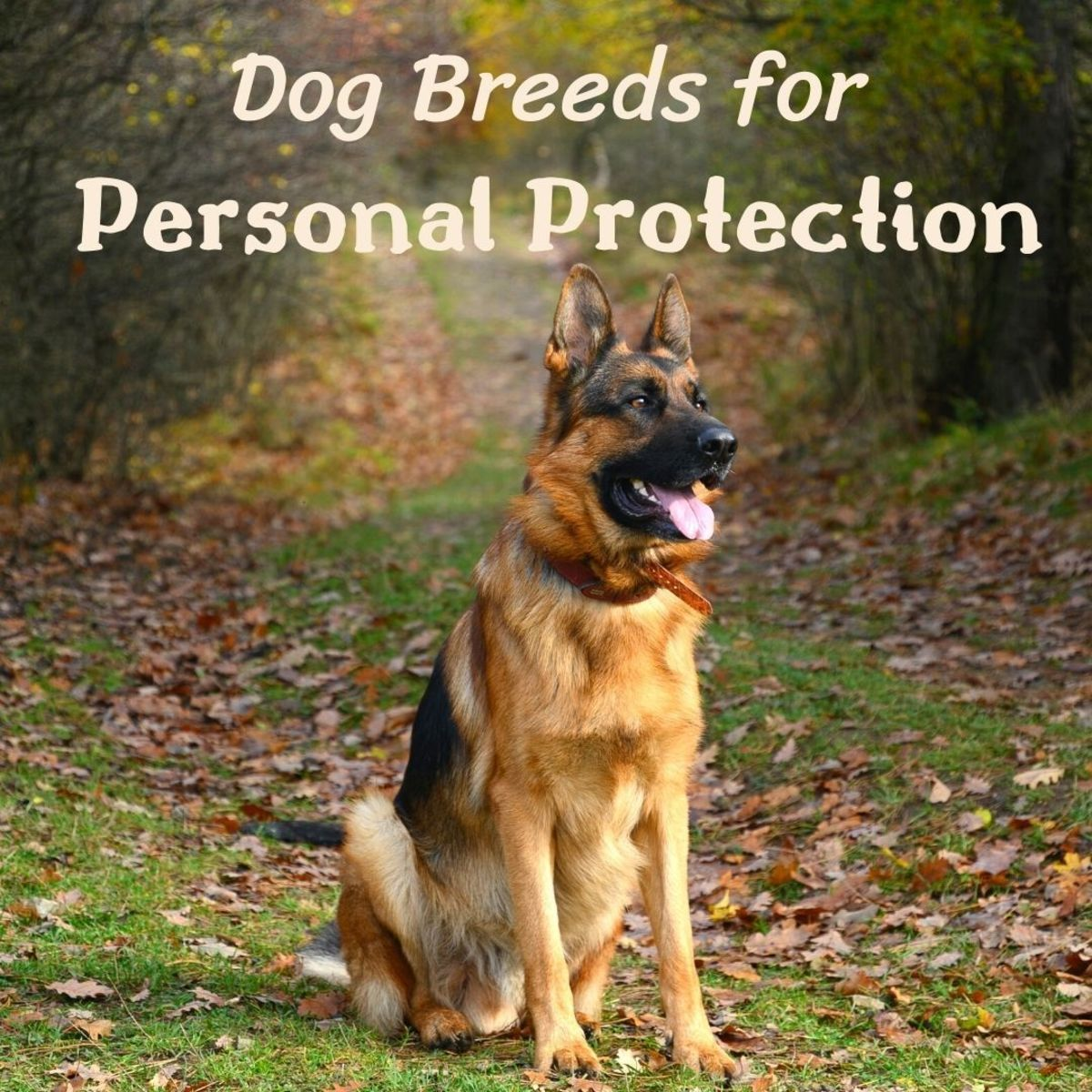 5 Best Personal Protection Dog Breeds