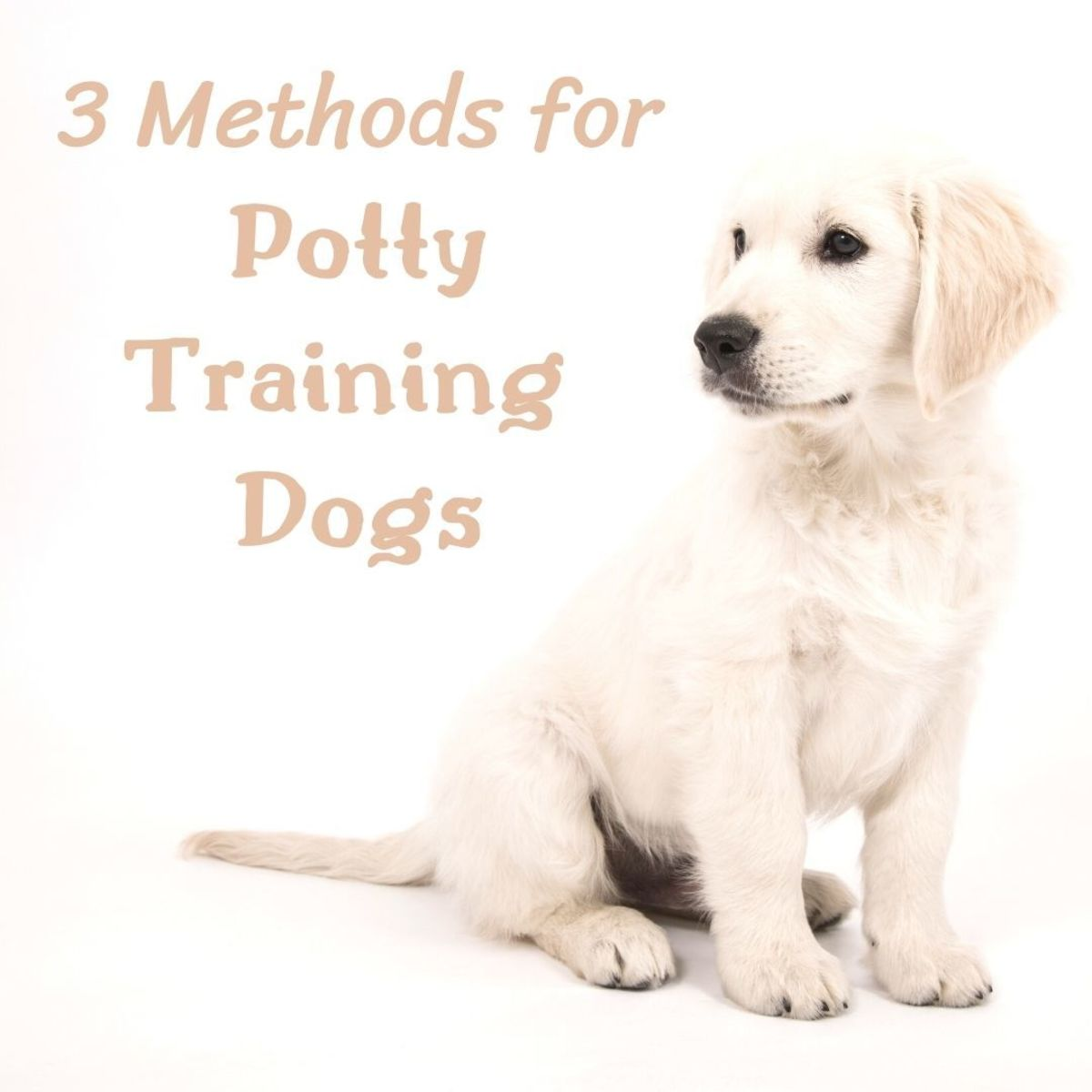 Potty training dogs is tough work—here are a few techniques that will help you housetrain your pup!