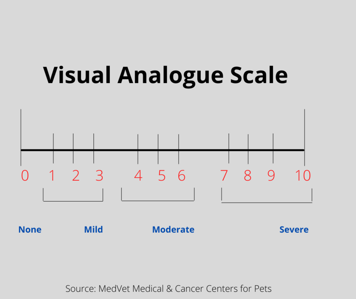 Visual Analogue Scale can be numerical or non-numeric.  It is a straight line that can be numbered from 1 -5 or 1-10 and with the higher number determining the intensity of the cat's pain.