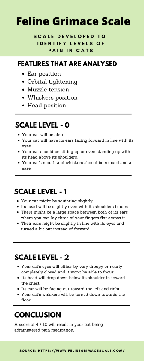 The Feline Grimace Scale is an additional tool that veterinary personnel use to help them gauge how much pain a cat is in.