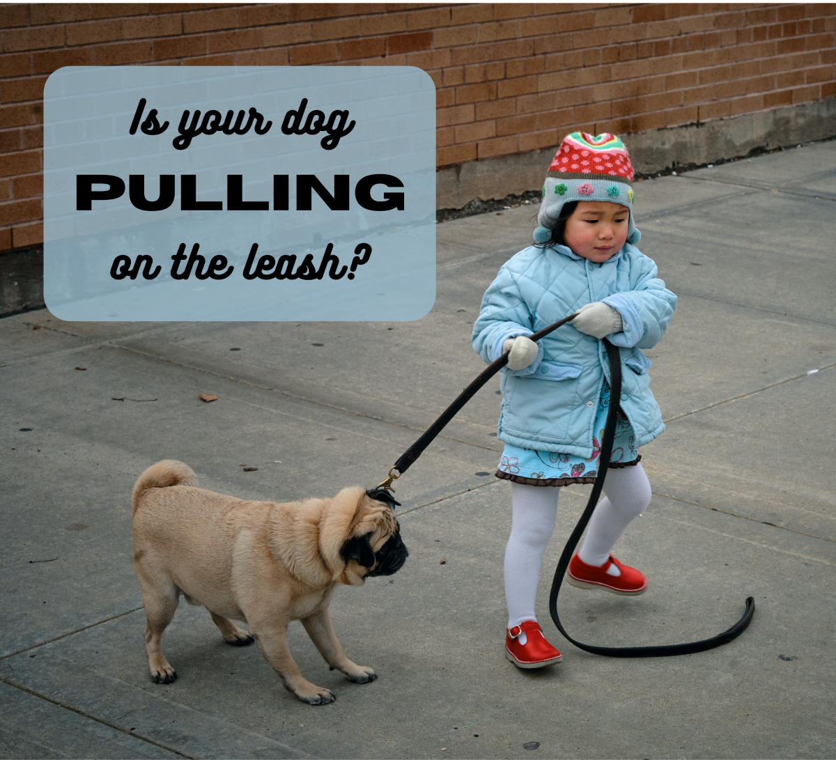 How to Teach Your Dog Not to Pull on a Leash