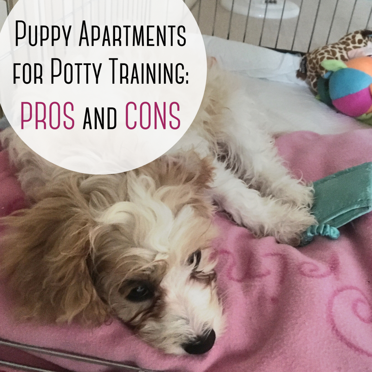 """Are """"puppy apartments"""" the new solution to potty training dogs?"""