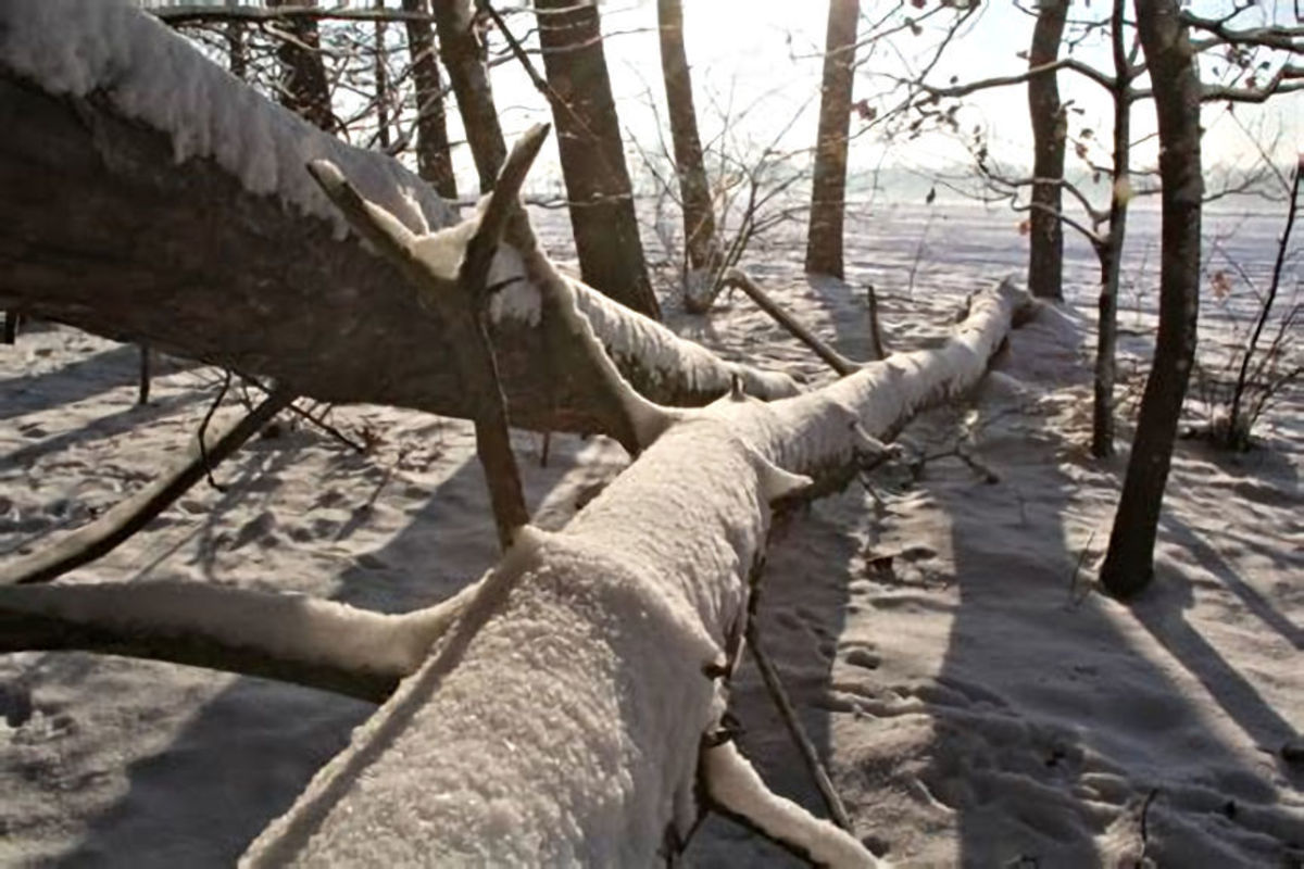 Could Death lay on the other side of this fallen tree?