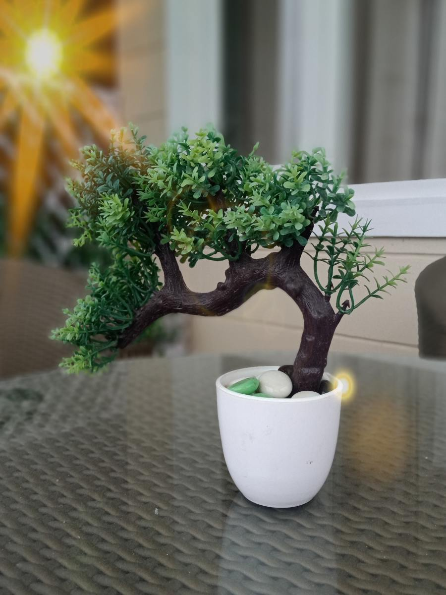 Correct placement, positioning, and watering of your bonsai tree will ensure your bonsai stays healthy.