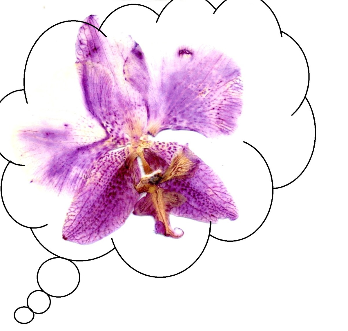 The Orchid - Week 4 for Project Good Thoughts